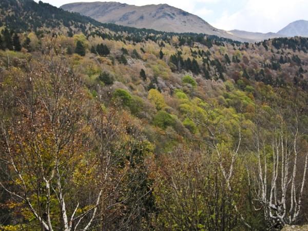 bosques del valle de Estós