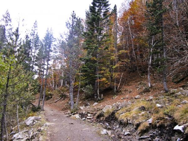 otoño en el valle de Estós