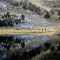 Caballos en Pllan d'Estan