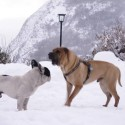 Orix jugando en la nieve