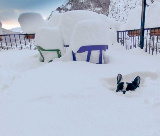 bulldog-frances-en-la-nieve